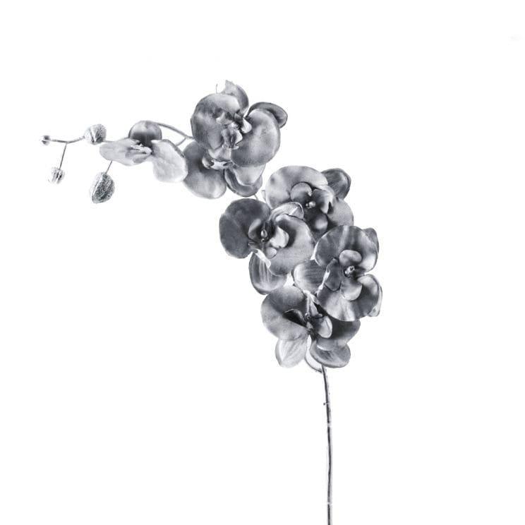 Kwiat Silverorchid