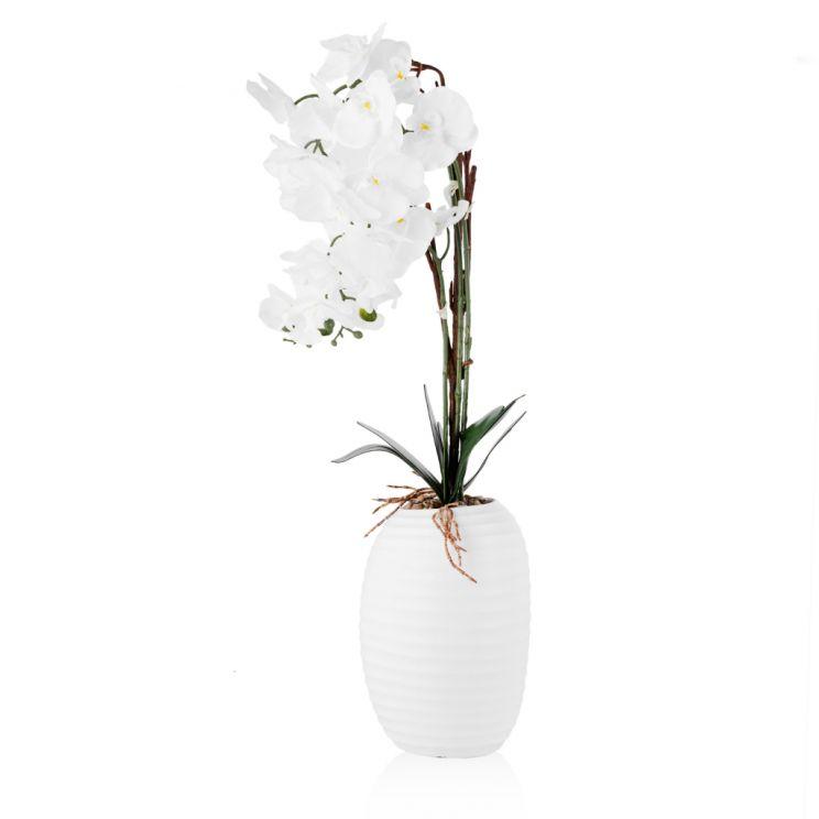 Stroik Orchidio Big