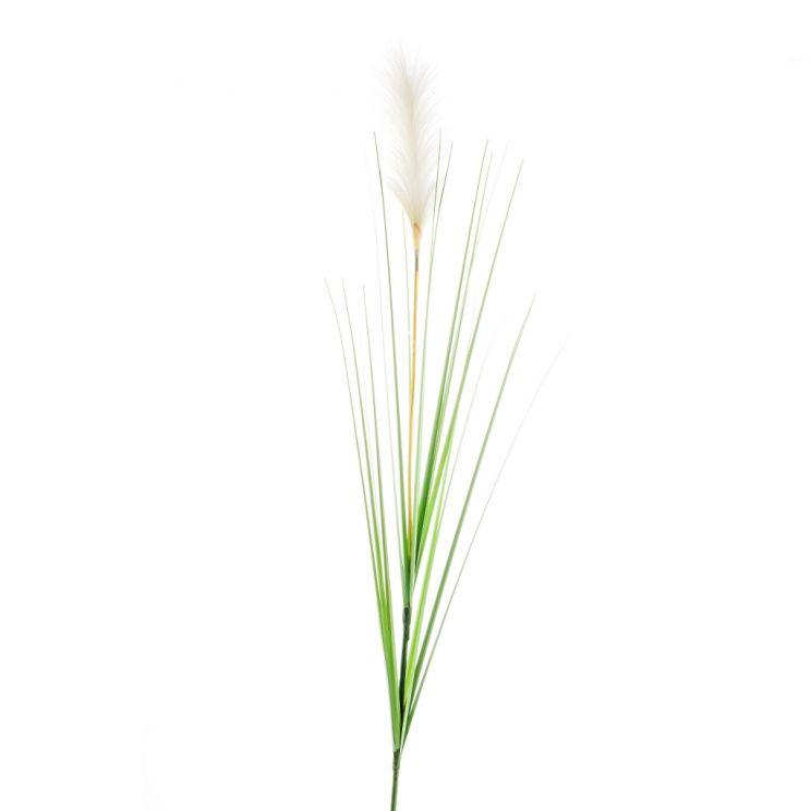 Kwiat Miscant