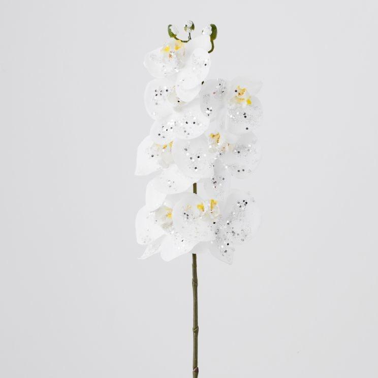 Kwiat Orchiglam