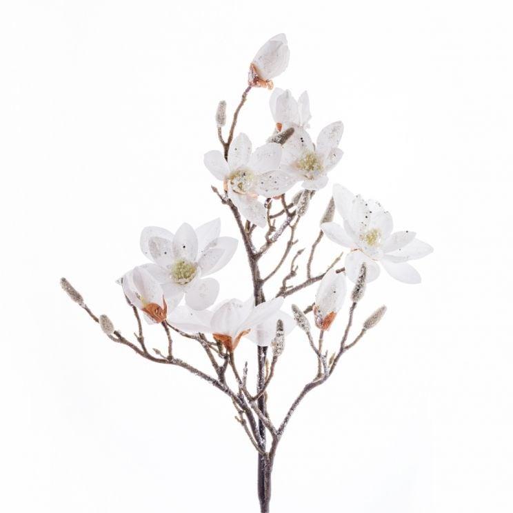 Kwiat Magnoglam