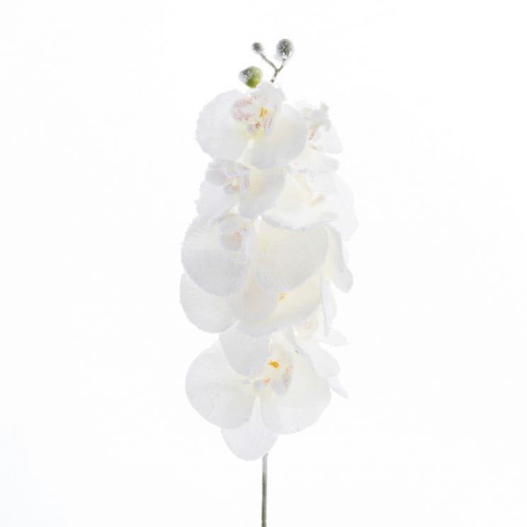 Kwiat Frozen Orchid