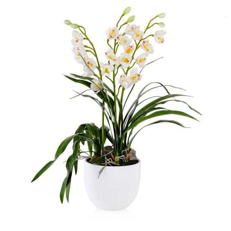 Stroik Orchidius