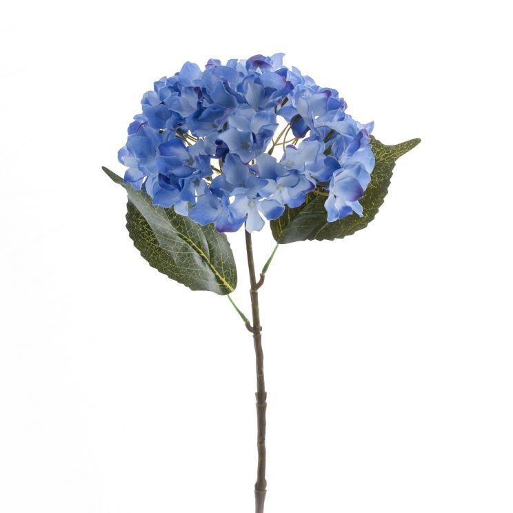Kwiat Hydrangena