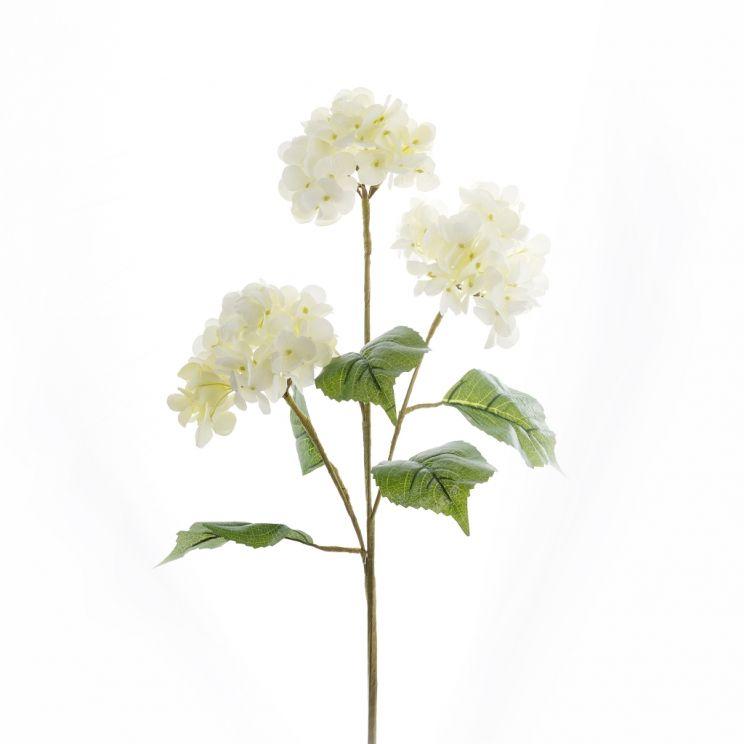 Kwiat Hydrangenatrio