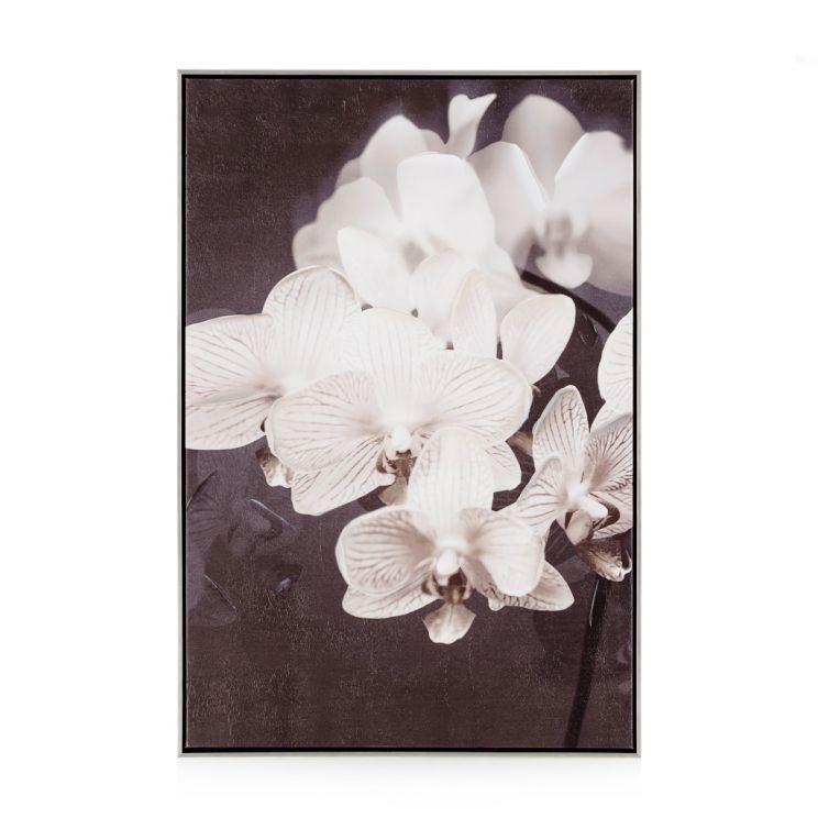 Obraz Orchides