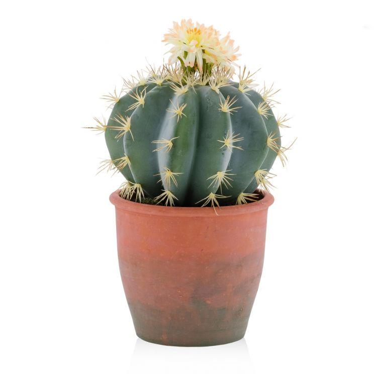 Stroik Cactus
