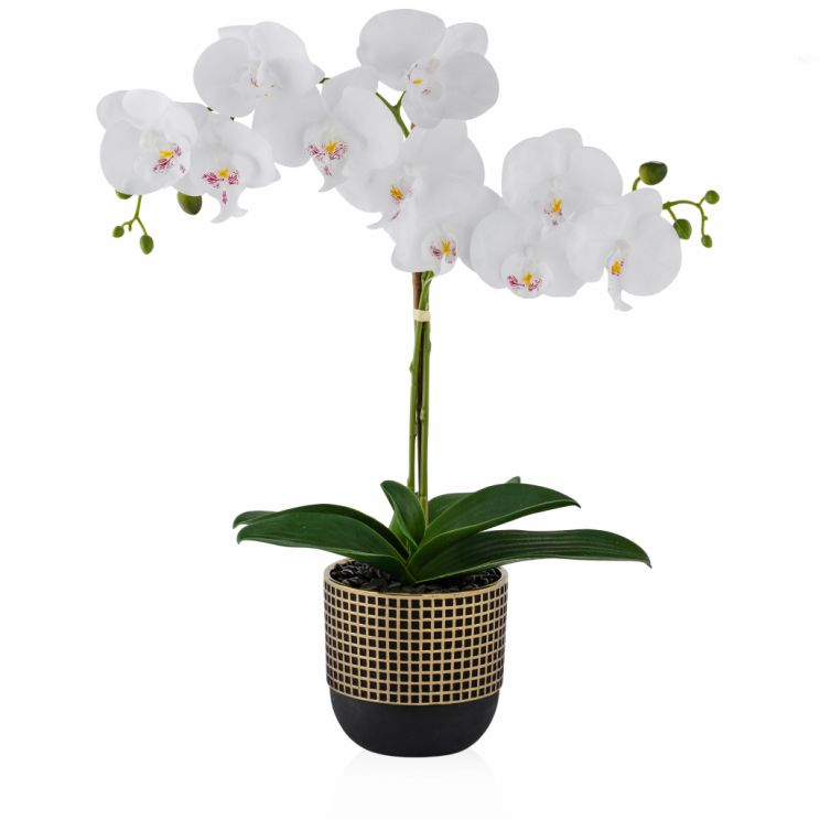 Stroik Orchidoes
