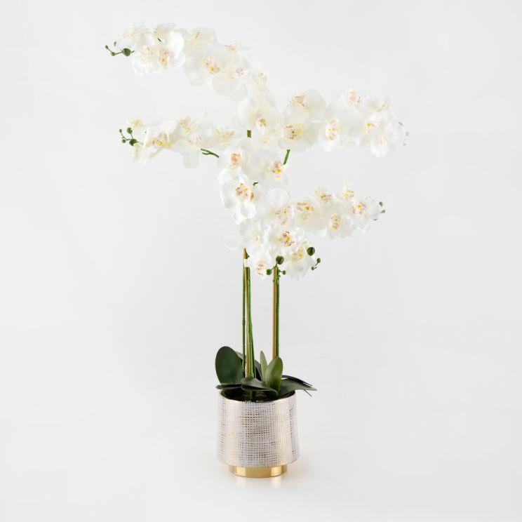 Stroik Orchidino