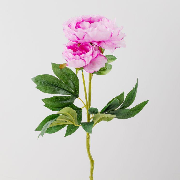 Kwiat Pivoin
