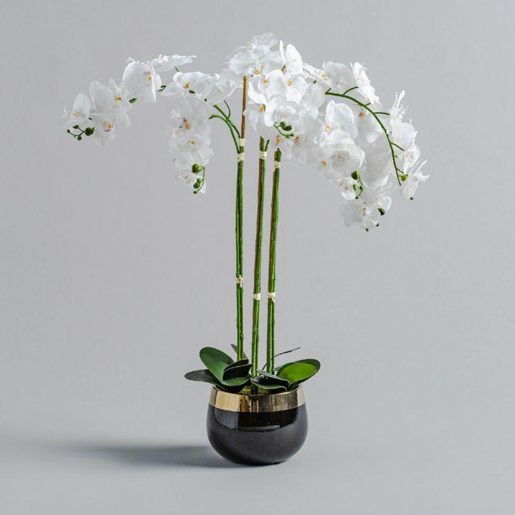 Stroik Orchida