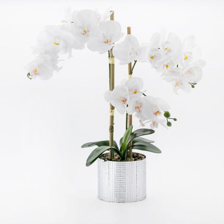 Stroik Orchidisco