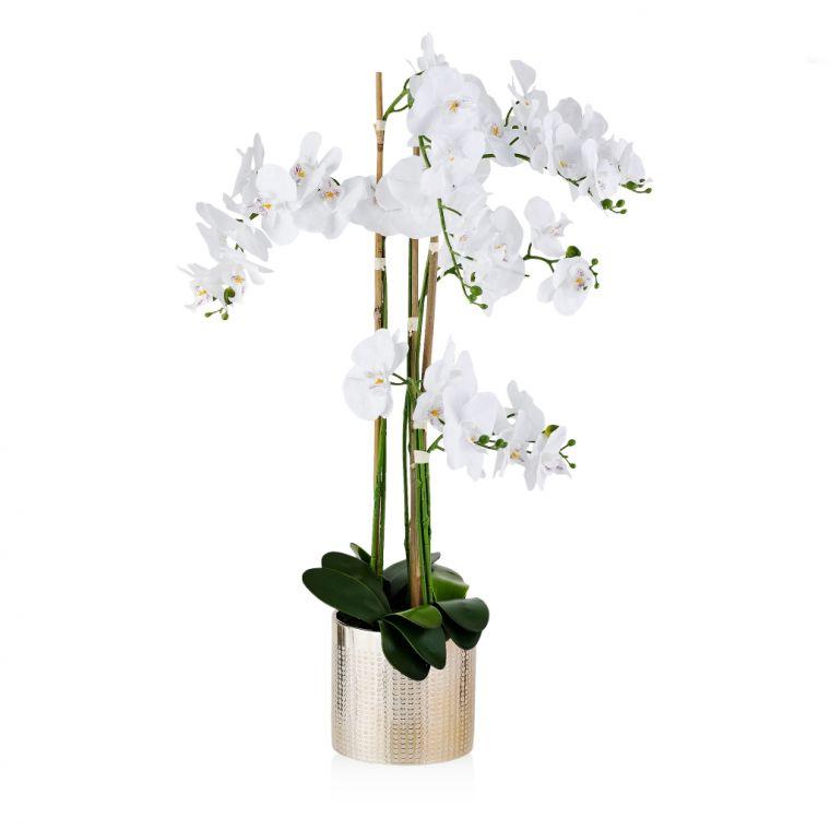 Stroik Orchidina