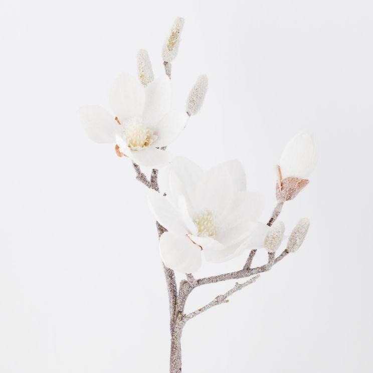 Kwiat Magnoss