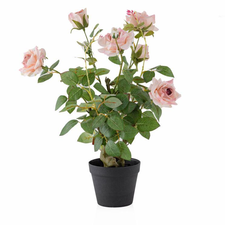Stroik Rosetree