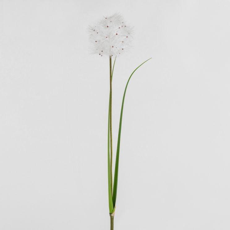 Kwiat Dandino