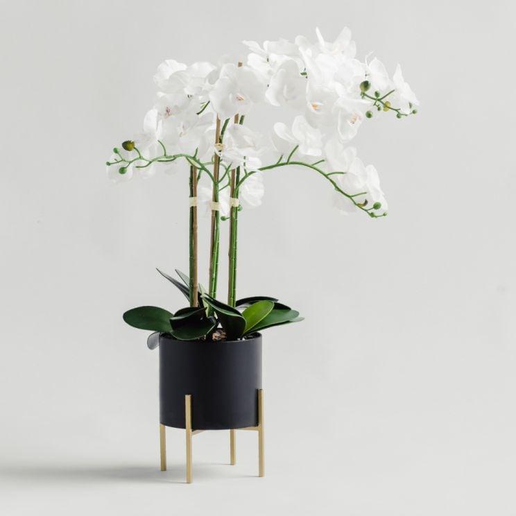 Stroik Orchidanos